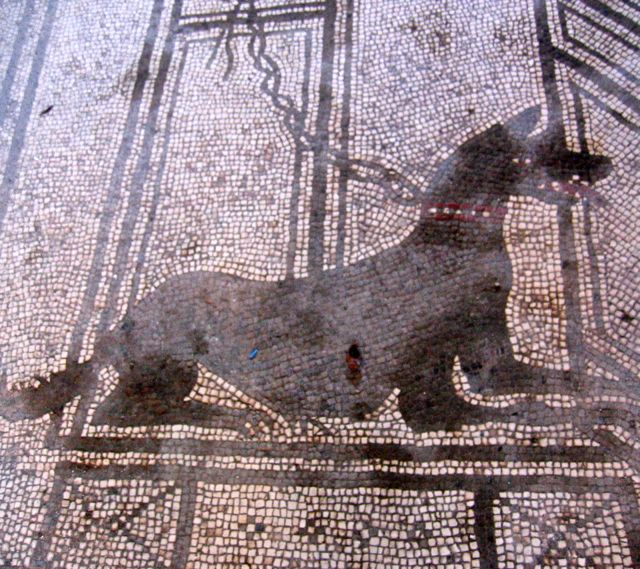 A Roman Dog, circa 100 AD...Photo Santiago Rodriguez